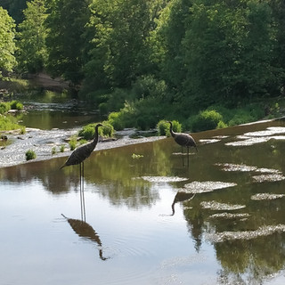 Waterbirds in Kyllburg