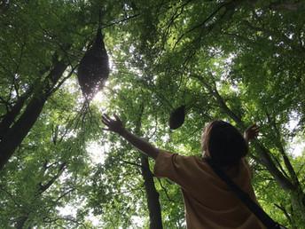forestbirds