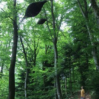 Forestbirds in Kyllburg