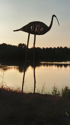 Ptaki wodne nad rzeką