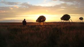Migration - safari