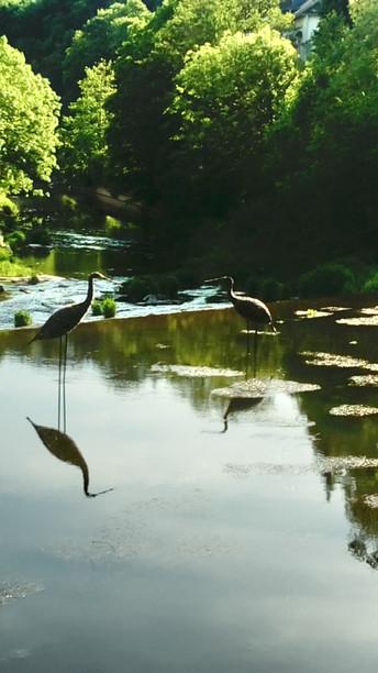 Waterbirds Kyllburg