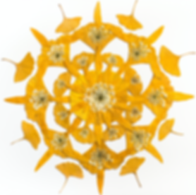 Ginkgo mandala screenshot.png