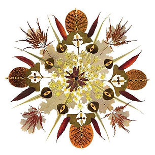 Mandala. Smoke bush, Japanese maple, Que