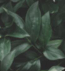 close-up-dark-dark-green-1228133.jpg