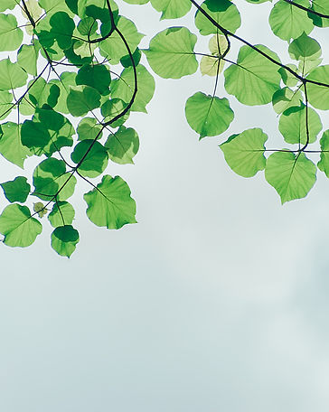 branches-cloudy-environment-1131458.jpg