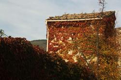 La douceur de l'automne au Domaine La Belle Verte.