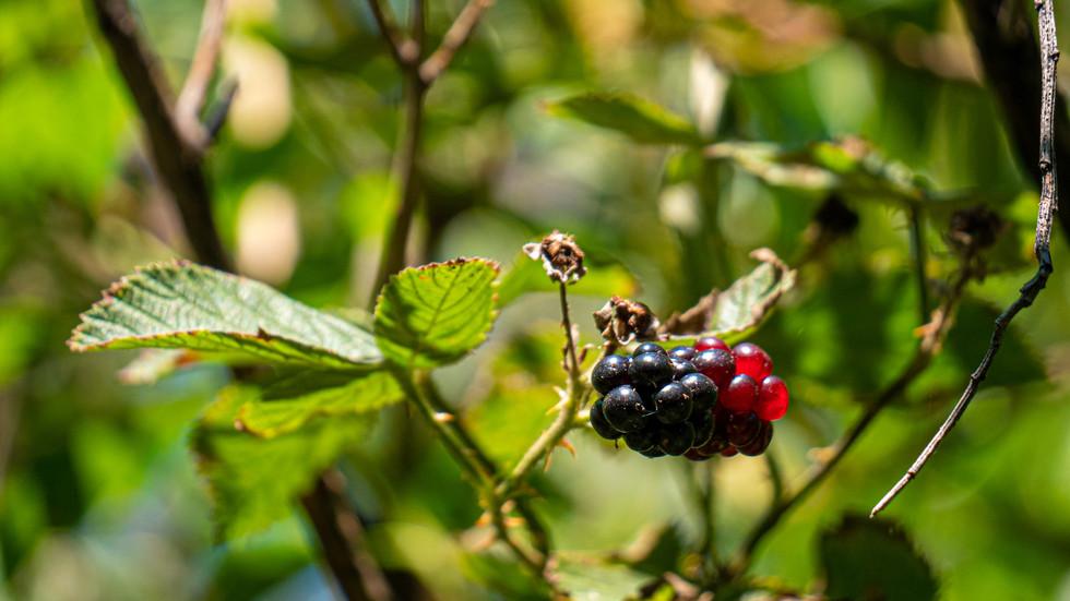 Gradient Berry