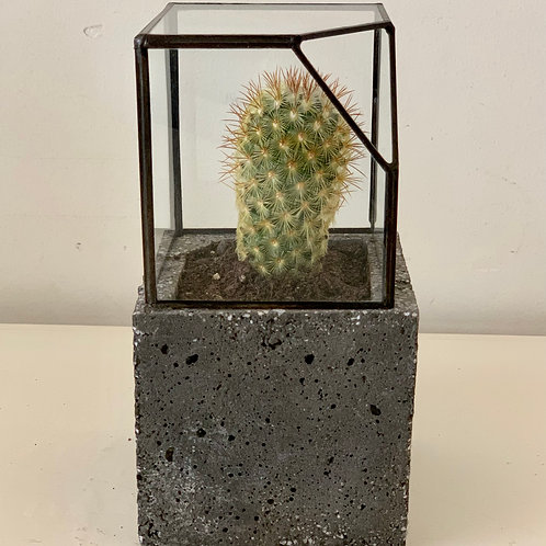 Flower Pot with cement and glass, by Bababots