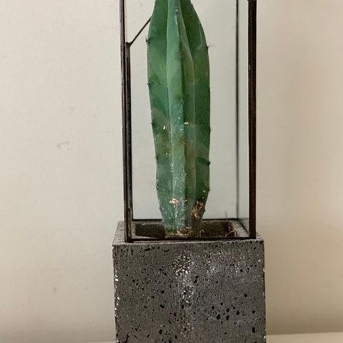 Flower Pot (Tall Version) -cement-glass-metal-vitro-cactus
