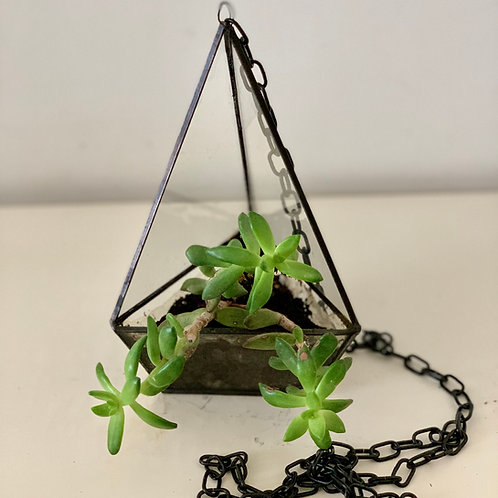 Hanging Flower Pot with Metal & Glass by Babapots