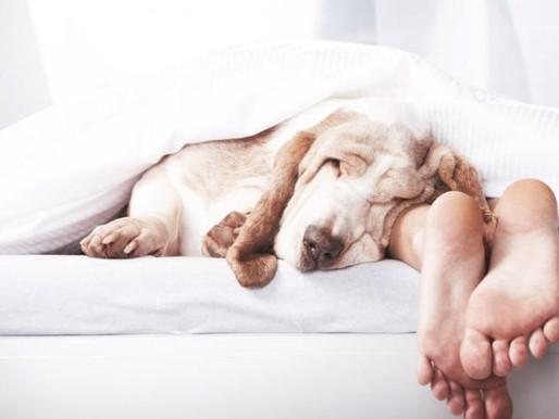 Waarom slaap je veel meer oplevert dan je nu denkt