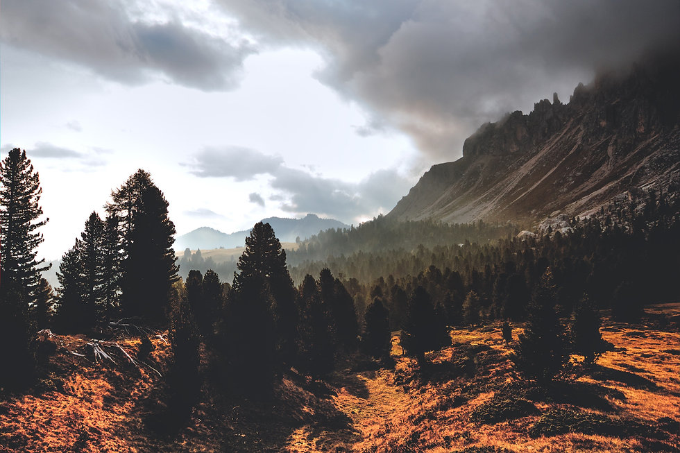 clouds-conifers-desktop-wallpaper-707344