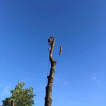 Tree Surgeon Rolls of Monmouth