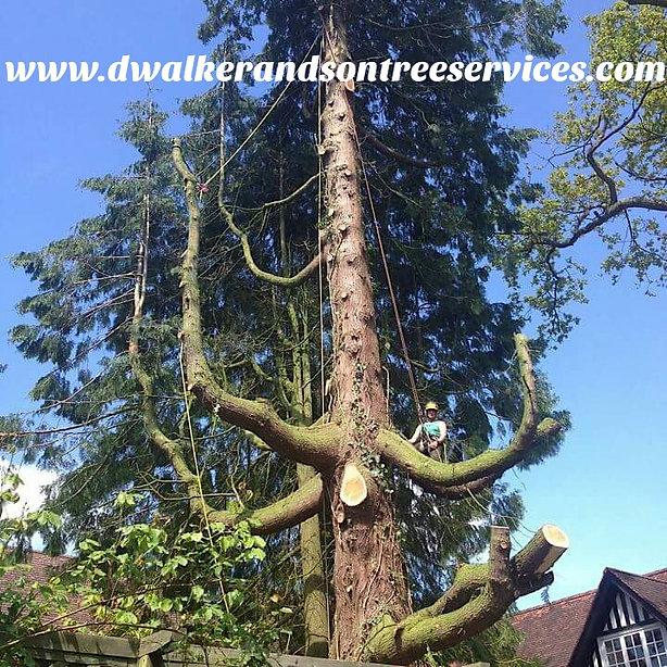 Tree surgeon Abergavenny, Ross, Grosmont, Skenfrith, Monmouth