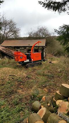 Tree removal Abergavenny
