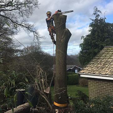 Tree Surgery Monmouth.