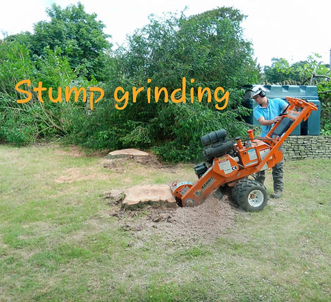 Stump removal Monmouthshire.