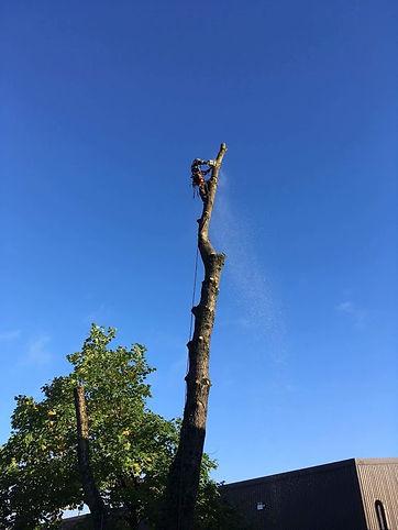 Tree surgery Monmouth