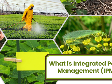 What is Integrated Pest Management (IPM)?