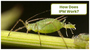 How Does IPM Work?