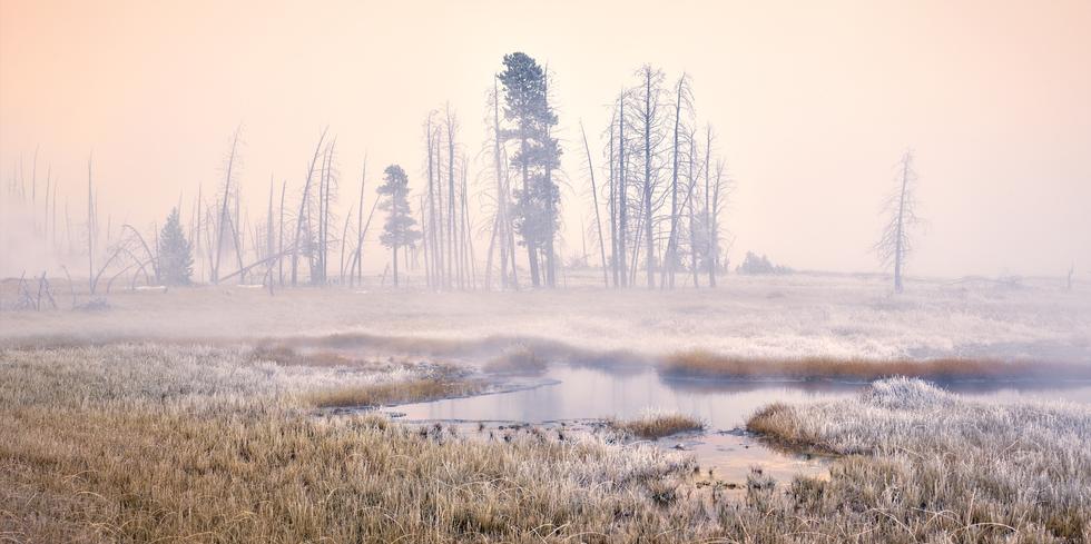 """""""Yellowstone Mist"""""""