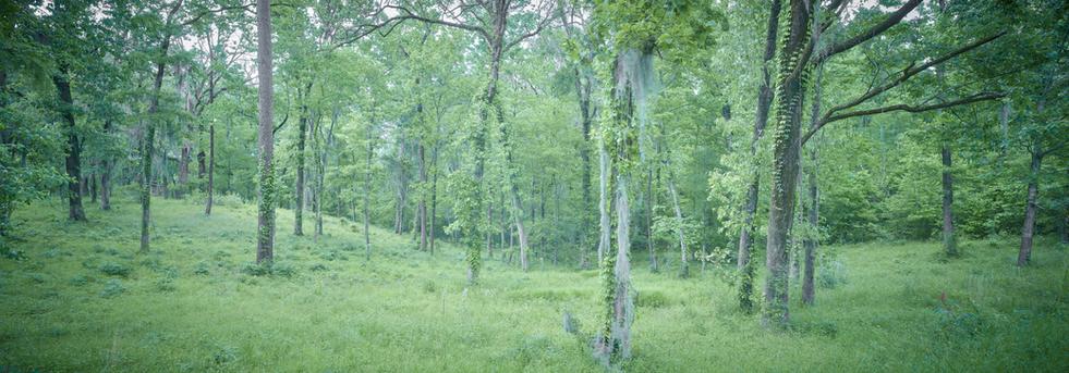 """""""Caddo Woodland"""""""