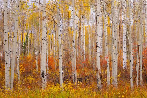 """""""Shades of Autumn"""""""
