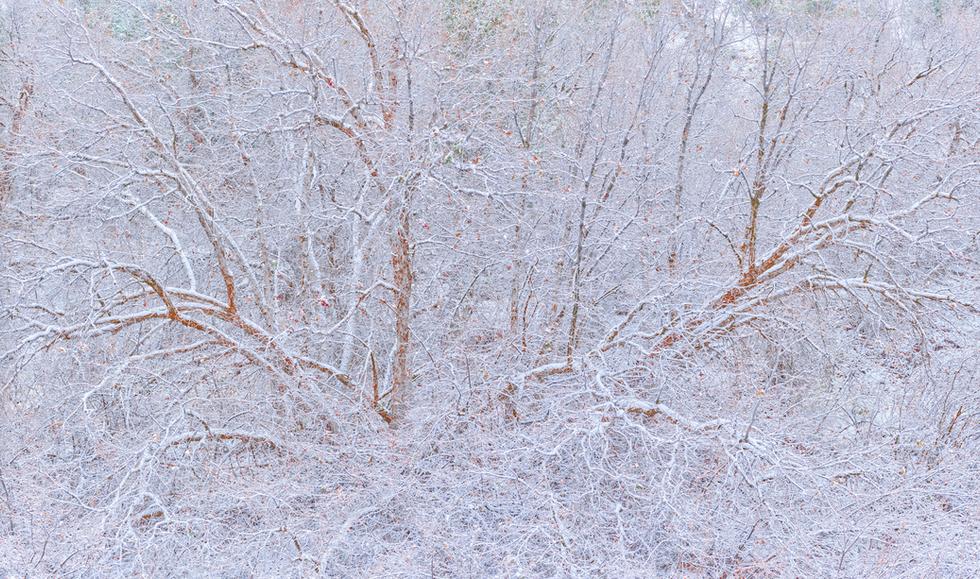 """""""Quiet of Winter"""""""