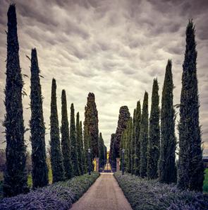 """Beyond the Cypress"""