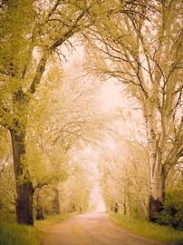 """""""Strada dei Sogni"""""""