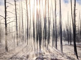 """Yellowstone Ice Fog"""