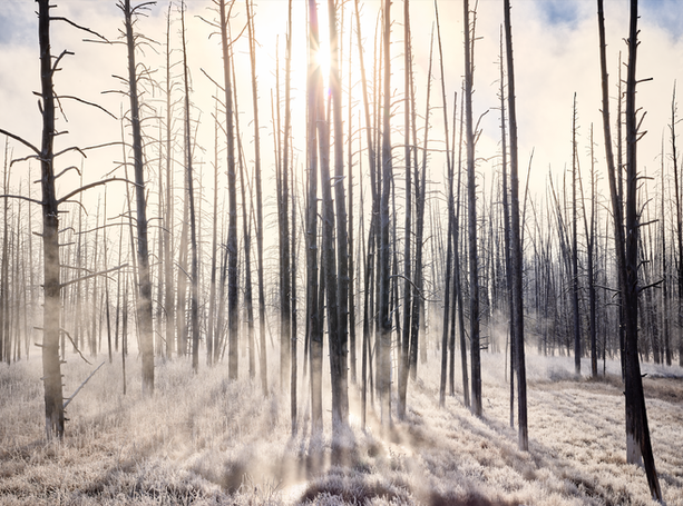 """Frosty Morning in Yellowstone"""
