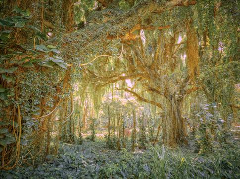 """""""Morning Rainforest"""""""