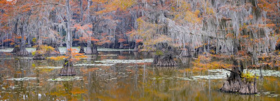 """""""Louisiana Dreaming"""""""