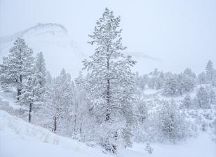 """Zion Snow"""