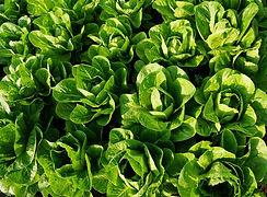 salad-2368650_1920_edited.jpg