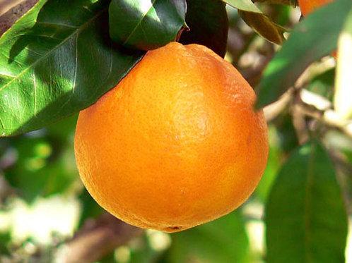 Orange Navel petit calibre - 500g - Italie