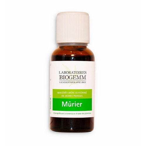 Mûrier - 30ml