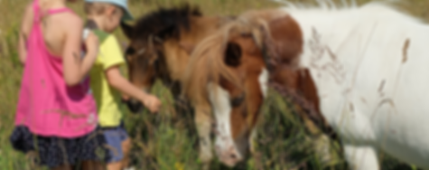 Pony Express Header.png
