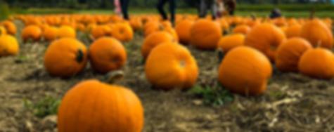 Pumpkin Patch Header.png