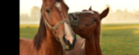 Adopt-a-Horse Header.png