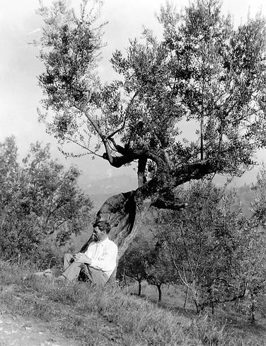 DHL at tree.webp
