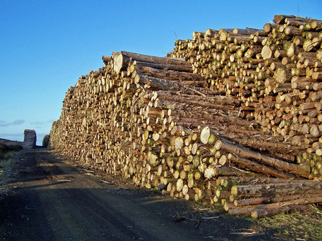 Hurricane Pushes Up Lumber Prices, While Fundamentals Point to Longer-Term Rise