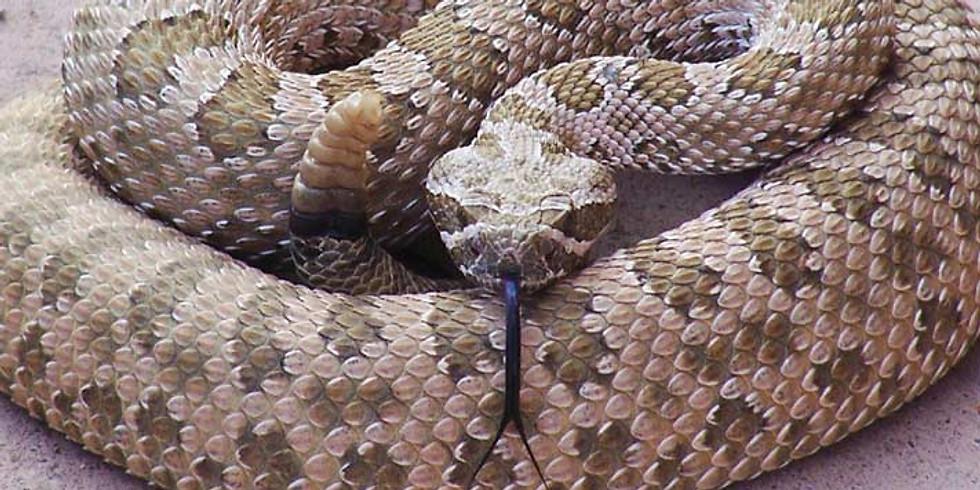 Rattlesnake Aversion Training
