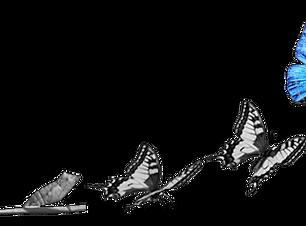 Papillon-transfo-digitale.png