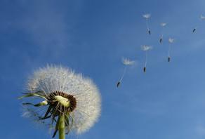 Le vent du changement