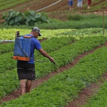 Responsabilização dos trabalhadores rurais pelo uso inadequado dos agrotóxicos