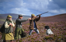 Partridge Shooting in Scotland
