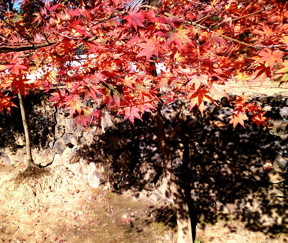 紅葉と石組み